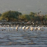Λίμνη Κερκίνης